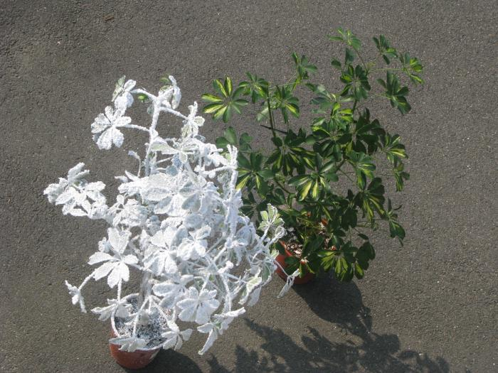 Catalogue neige artificielle flocage neige artificielle for Catalogue plantes vertes